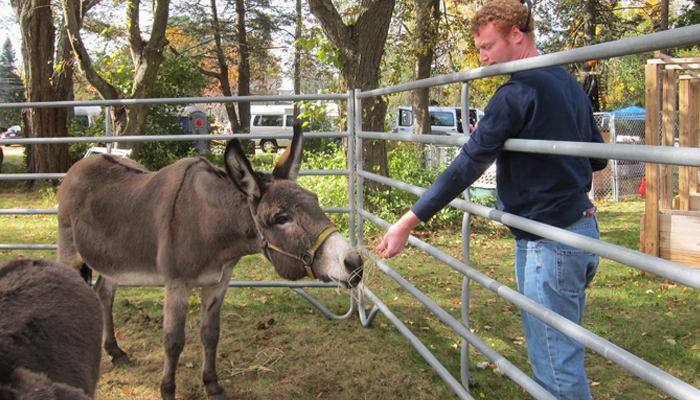 meeting donkey